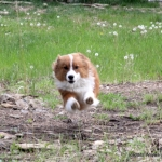 Hover dog